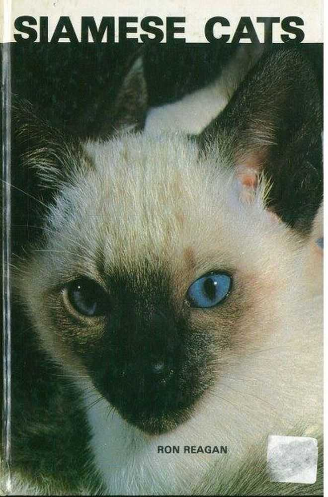 Image for Siamese Cats