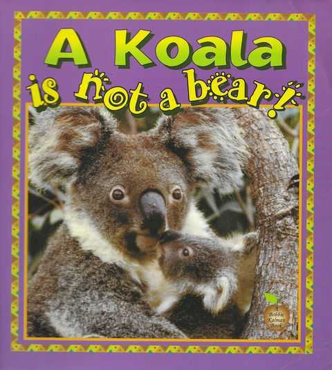Image for A Koala Is Not A Bear
