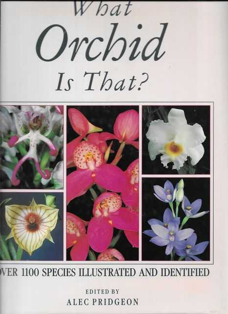 Image for What Orchid is That?